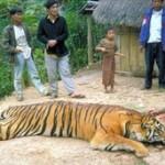 خرید و فروش حیات وحش - poaching