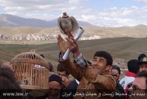 آزاد کردن کبک های اسیر