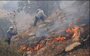 نابودی جنگل های ایران