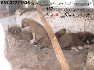 سگ کشی در مشهد