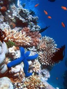 جزیره مرجانی اکوسیستمی غنی